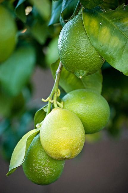 Nice Fruits